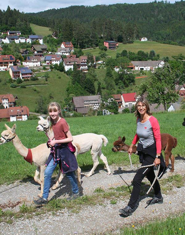 Alpaka Wanderung Schwarzwald